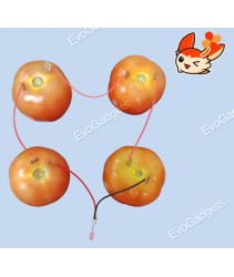 DIY Science Kit : Fruit Battery Circuit (The Tomato Battery)